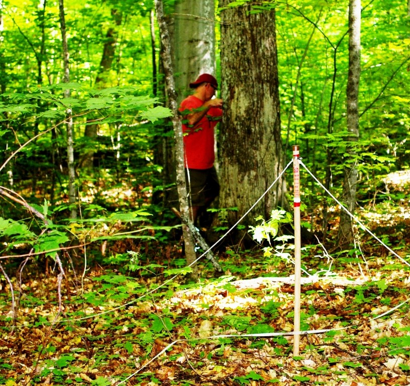 Shaw Woods Outdoor Education